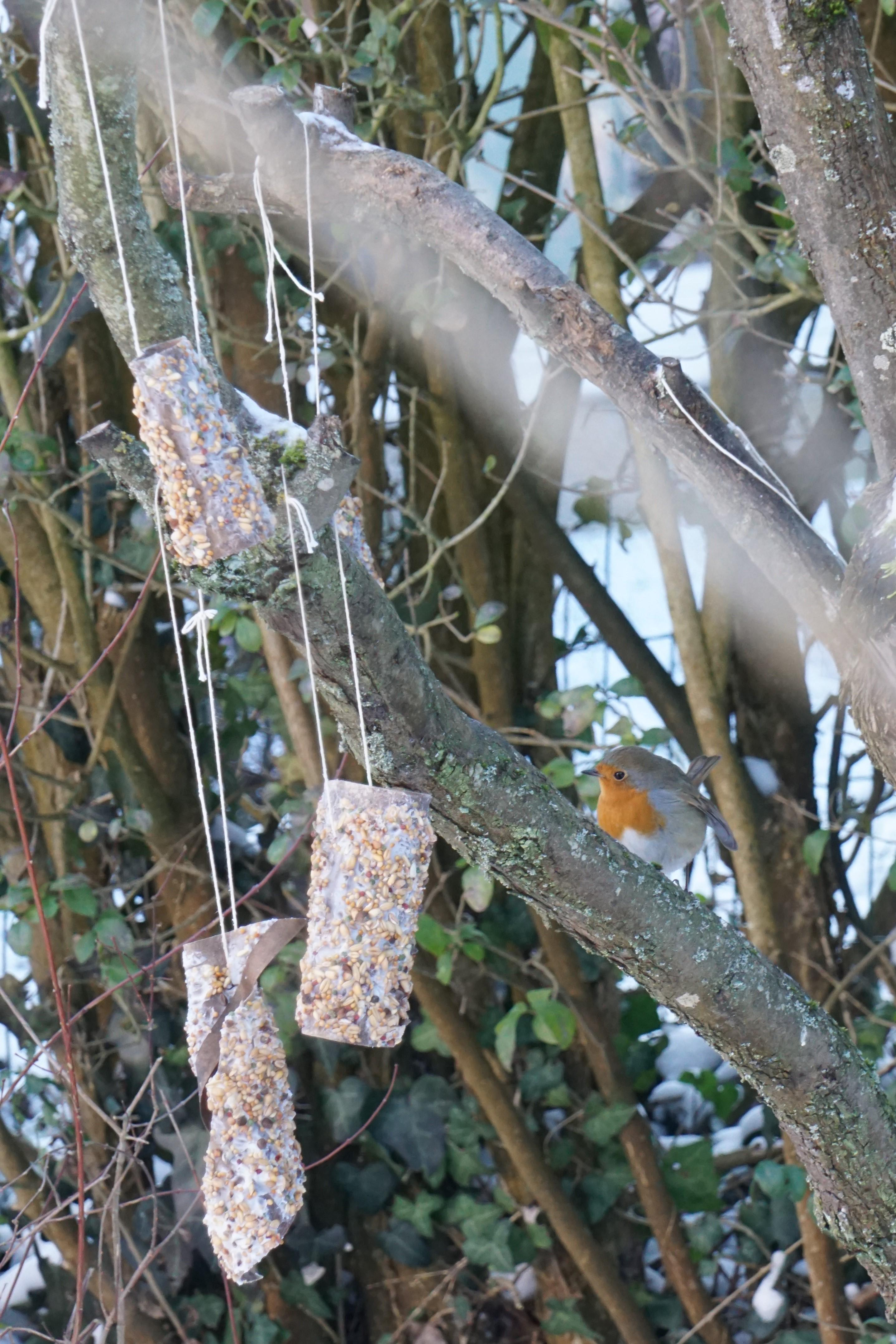 home-made bird feeders