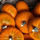 Pumpkin harvest in a large wicker basket