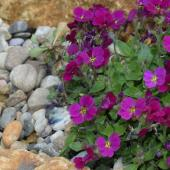 Mineral mulch gravel with flower