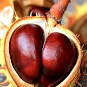 Horse chestnuts can help treat hemorrhoids.