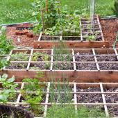 Three square-foot vegetable beds