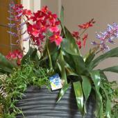 Indoor flower arrangement for winter flower plants