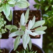 Herb gardens, new equipment, new garden ideas