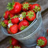 A tin bucket filled with strawberries on a dark wooden plank.