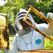 Beekeeper opening a hive