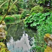 Pond with plants and rocks