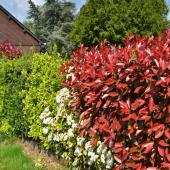 Mixed hedge with different shrubs