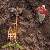 Coronavirus won't stop gardeners like these active seedling-planting toys!